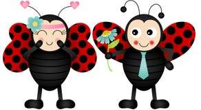 Loving ladybirds Stock Image