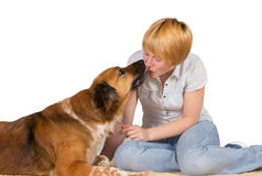 Loving loyal dog Stock Image