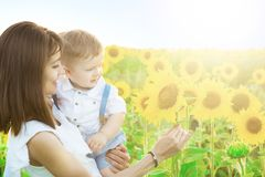 Loving mother holding son in her arms in rest on sunflowers field. Nature and summer Stock Images