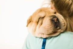 Loving my puppy royalty free stock photo