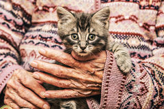 Loving old woman holding a kitten. Royalty Free Stock Photography