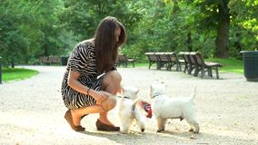 Loving pet owner spent time with puppies. Static shot. Loving pet owner spent time with puppies. woman in dress fondle pair of her little dogs in park. Static stock video footage