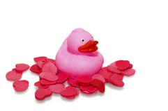 Loving rubber duck Royalty Free Stock Images