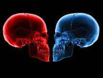 Loving skulls Royalty Free Stock Images