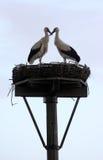 Loving storks Stock Image