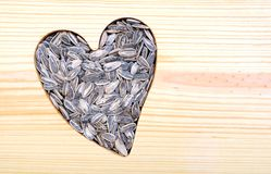 Loving sunflower seeds Royalty Free Stock Photos