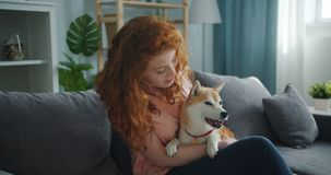 Loving woman speaking to cute dog and stroking animal on sofa in apartment. Loving young woman is speaking to cute well-bred dog and stroking beautiful animal stock video footage