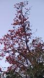 Lovly drzewo w lesie Obrazy Royalty Free