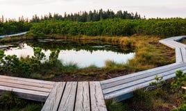 Lovrenska lakes -Slovenia. Lovrenska lakes with wooden path in the foreground - Slovenia royalty free stock photo
