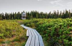 Lovrenska lakes -Slovenia. Wooden tower at Lovrenska lakes - Slovenia stock photography
