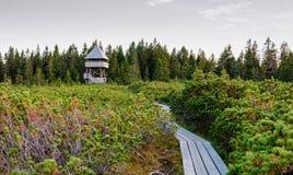 Lovrenska lakes -Slovenia. Wooden tower at Lovrenska lakes - Slovenia stock photos
