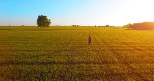 Low altitude drone flight in front of sporty woman. UHD 4K aerial view. Low altitude drone flight in front of sport woman at perfect green rural field. Sunset stock footage