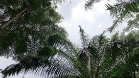 Low angle arch shot of tree in park or forest including rain tree and palm date. Ungraded with flat profile stock footage