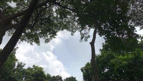 Low angle arch shot of tree in park or forest including rain tree and palm date on cloudy day. With blue sky stock footage