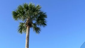 Low angle of Florida palm tree against clear blue sky, 4K. Florida palm tree against clear blue sky, paradise, 4K stock video footage