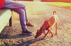 Low angle image of person with his dog. selected focus Stock Images