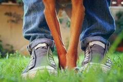 Low angle image of person with his dog. selected focus Stock Photography
