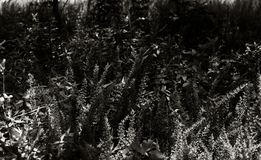 Low Level Plant Life. Low angle monochrome shot of weeds, grass, and various plant life shot at nearly ground level stock photo