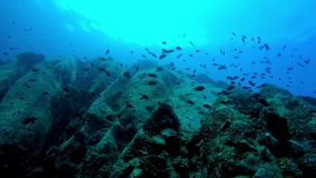 Low angle of multitudes of fish around a rock face. Silhouetted against the surface stock footage