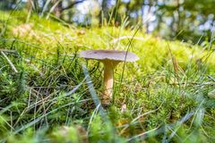 Low angle mushroom Stock Photo