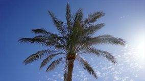 Low-angle palm top view against clear sky. On a hot summer windy day stock video footage