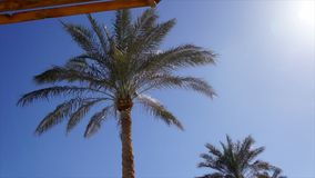 Low-angle palm top view against clear sky. On a hot summer windy day stock footage