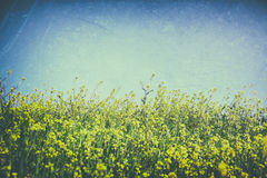 Low angle photo of flowers against crisp blue sky. retro filtered image Royalty Free Stock Images
