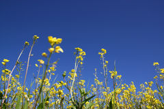Low angle photo of flowers against crisp blue sky . selective focus Stock Photo