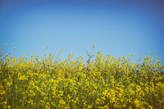 Low angle photo of flowers against crisp blue sky . selective focus Royalty Free Stock Photography