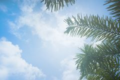 Low Angle Photo of Palm Leaves Royalty Free Stock Image