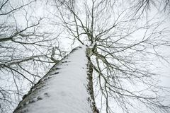 Low Angle Photo of Snow Covered Dried Tree Stock Images