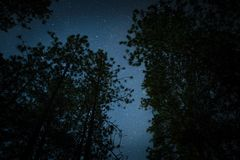 Low Angle Photo of Stars at Night Covered by Tree Leafs Royalty Free Stock Images