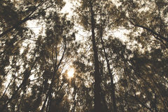 Low Angle Photo of Tree Royalty Free Stock Images