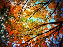 Low Angle Photo of Trees With Orange Leaves Stock Photography