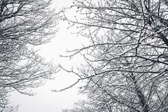 Low Angle Photography of Bare Tree during Winter Season Stock Images