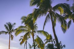 Low Angle Photography Of Coconut Trees Stock Photos