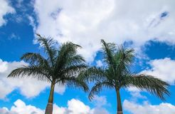 Low Angle Photography Of Coconut Trees Royalty Free Stock Photography