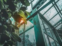 Low Angle Photography of Greenhouse Royalty Free Stock Image