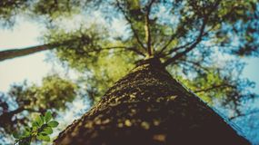 Low Angle Photography of Leaf Tree Royalty Free Stock Photos