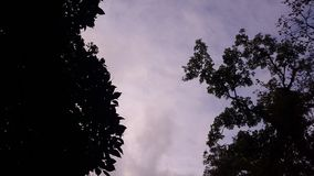 Low Angle Photography of Silhouette of Trees Under Calm Sky Royalty Free Stock Photo