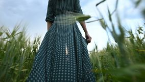 Low angle rear view. A young girl in a loose green dress leisurely walks along a green field of wheat. The concept of. Freedom and independence of women and the stock video footage