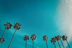 Low angle shot of beautiful palm trees under the clear blue sky