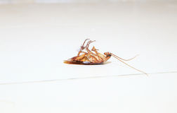 Low angle shot of a dead cockroach on floor toilet. As background or print card Royalty Free Stock Photography