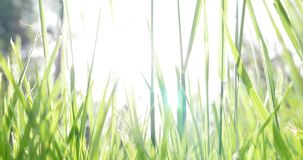 A low angle shot of grass, the shot moves up and down.  stock video