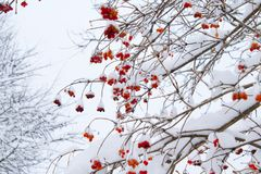 Low Angle Shot of Leafless Tree With Orange Flowers Stock Photo