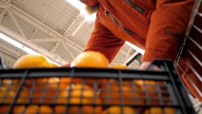 Low angle shot man in red jacket puts orange box into cart. Low angle shot strong man in red jacket puts large black plastic box of oranges into cart in stock footage