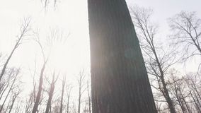 Low angle shot of the tops of trees without leaves.  Shoot with steadycam stock video