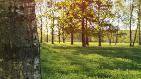 Low angle show in park with long shadows. Late spring early summer royalty free stock photos