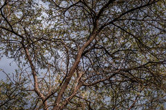 Low angle of a tree. A low angle shot of a tree Royalty Free Stock Photos