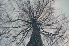Low Angle View of Bare Tree Against Sky Royalty Free Stock Photography